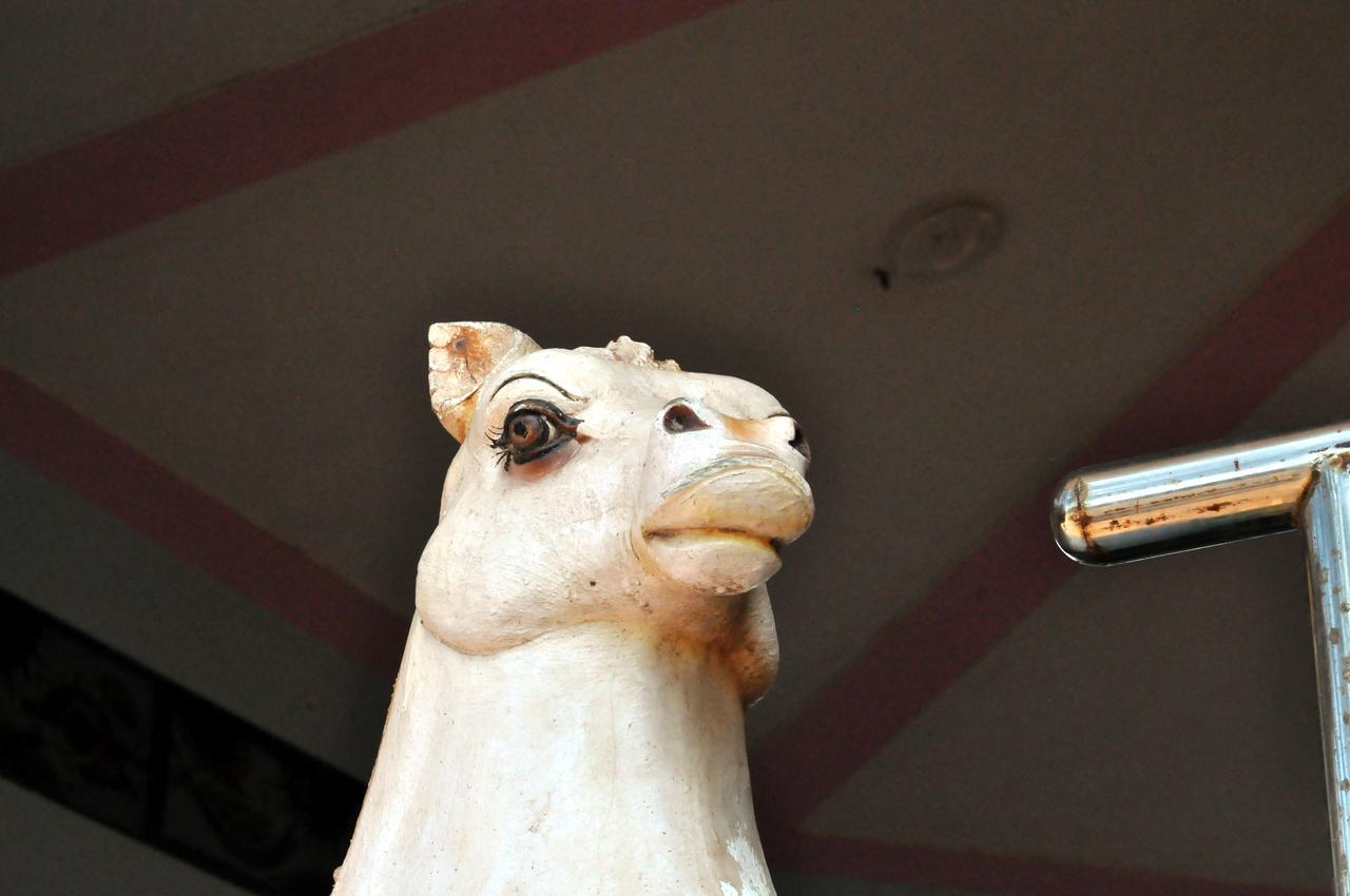 Фотография индийского божества в образе лошади